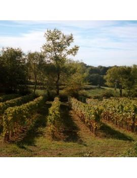 Domaine Labranche Laffont vignoble