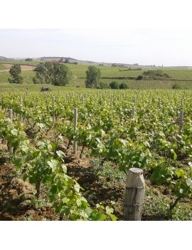 Domaine des Marrans vignoble.