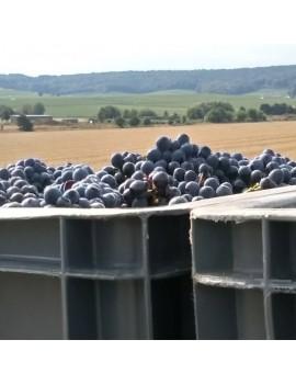 Champagne Couvreur-Philippart raisins