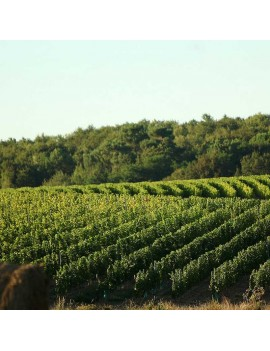 Château Landereau vignoble