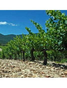 Domaine du Serre des Vignes vignoble