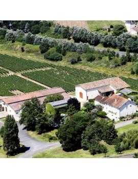 Château Penin vignoble