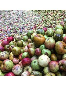 Cidre TOPA pommes