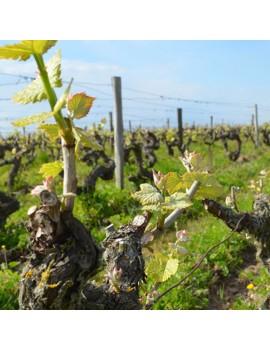 françois chidaine vignoble