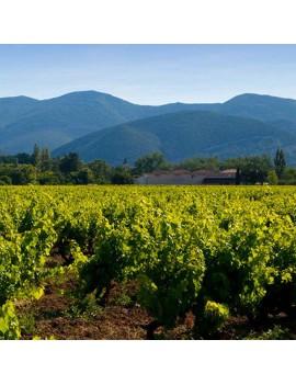 Domaine Poulet & Fils vignoble