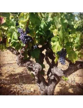 Domaine Les Terres d'Armelle vignoble