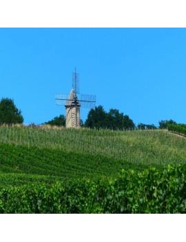Château Mémoires vignoble