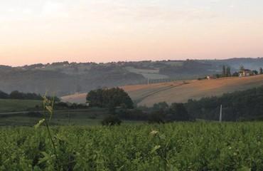 Elian Da Ros : découvrez le domaine mythique du vignoble marmandais